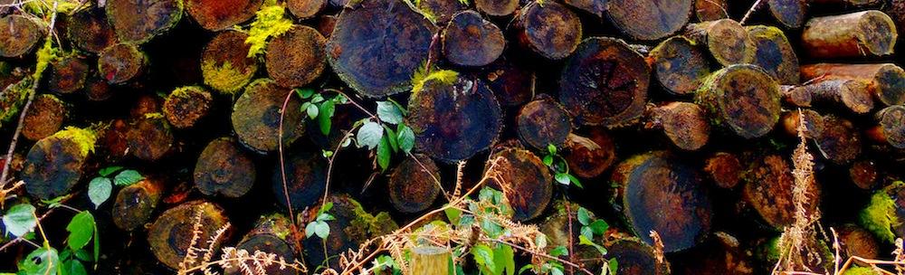 Three of Pentacles woodpile
