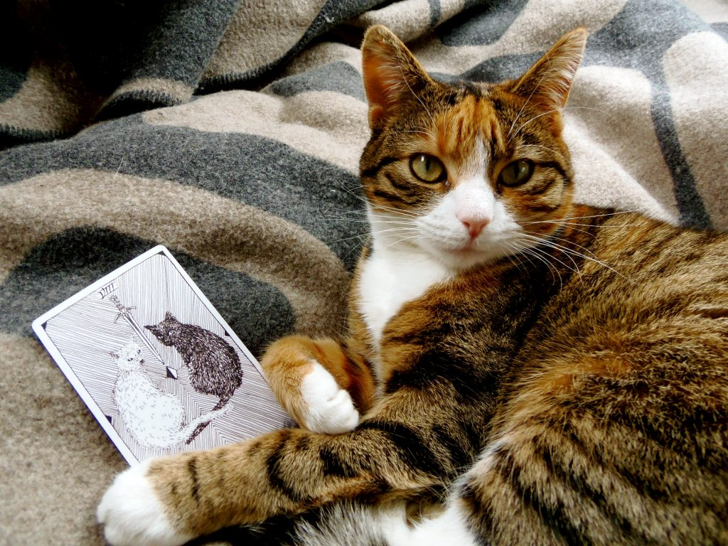 tarot cat