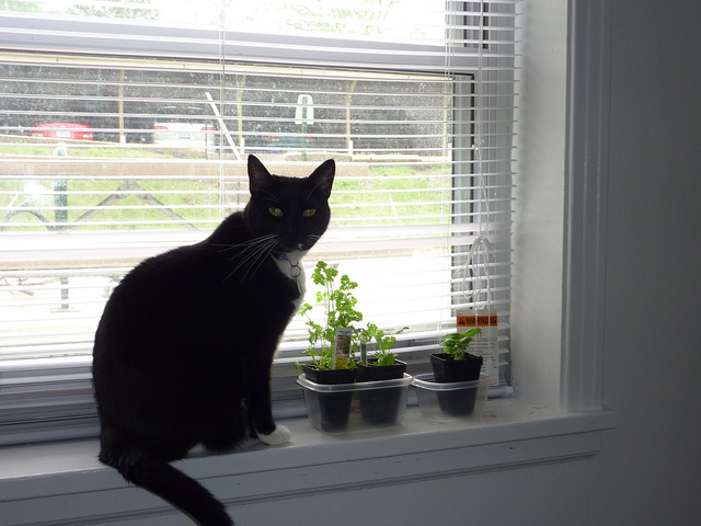 Peppercatandsprouts
