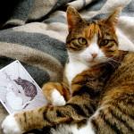 tarot cat